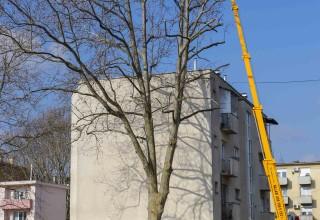 IVANEC U punom jeku radovi na revitalizaciji parkovnih površina i sanaciji drvoreda