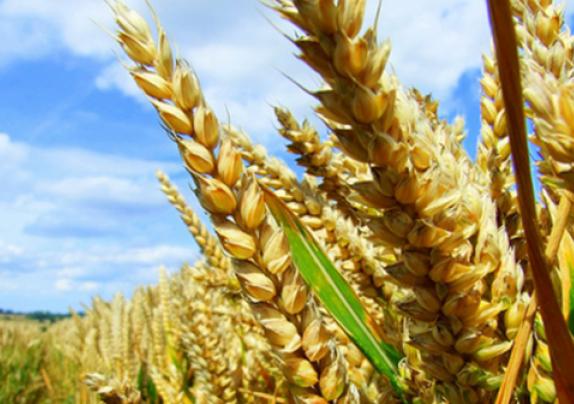 Objavljeni natječaji za operaciju  4.2.1. – Povećanje dodane vrijednosti poljoprivrednim proizvodima