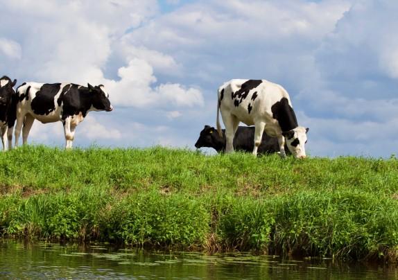 Otvoren Javni poziv – 24 milijuna kuna za uzgoj goveda, koza, ovaca i peradi