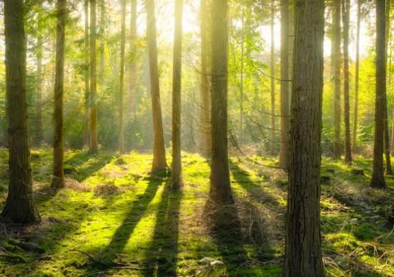Novi natječaj za poboljšanje šumske infrastrukture vrijedan 50 milijuna kuna