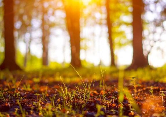 Za zaštitu i obnovu privatnih šuma Ministarstvo poljoprivrede daje 5 milijuna kuna
