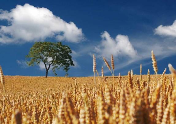 Objavljena tri natječaja za podmjeru 4.1. iz Programa ruralnog razvoja