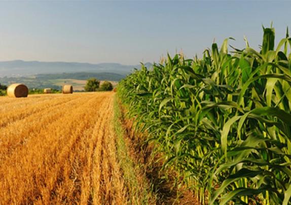 Varaždinska županija raspisala poziv za dodjelu potpora male vrijednosti u poljoprivredi u 2020. godini