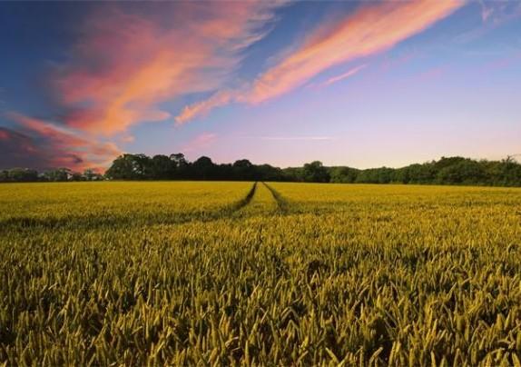 Ministarstvo poljoprivrede povećava financijska sredstva za nove natječaje za 650 milijuna kuna