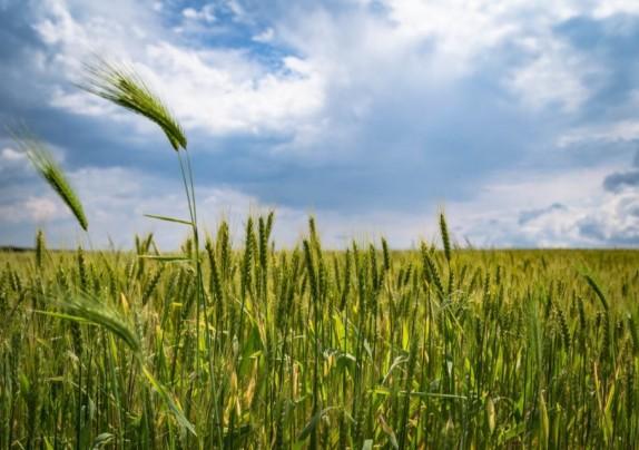 Objavljen natječaj za osiguranje usjeva, životinja i biljaka