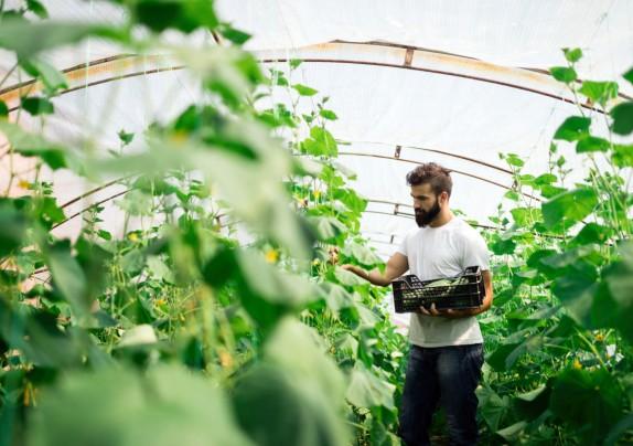 Ulaganja u proizvodnju povrća u zaštićenom prostoru - plasteniku
