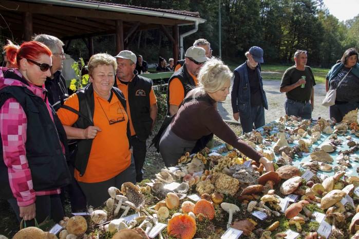 150 sudionika na 4. međunarodnoj gljivarijadi u Ivancu