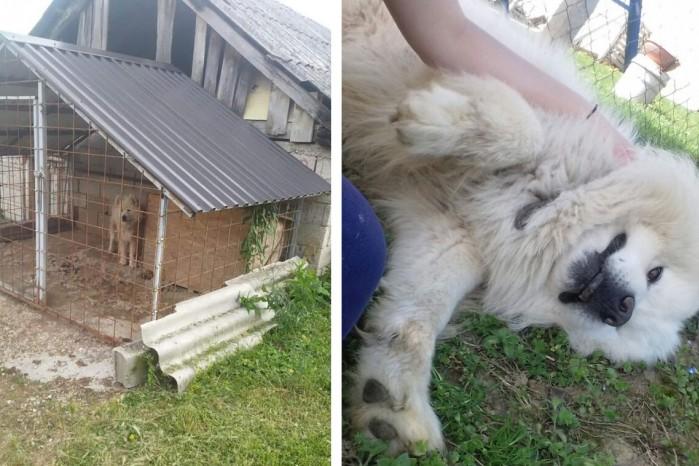 Veterinarska inspekcija: Pas je primjereno smješten, u odličnom je stanju, ima svježu vodu i hranu