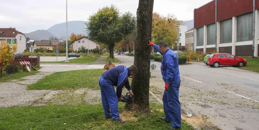 Počeli su radovi u Kumičićevoj ulici – ruše se brijestovi, slijedi gradnja nove oborinske kanalizacije