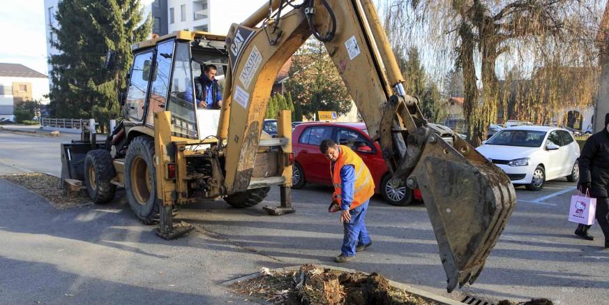 Odstranjuju se panjevi srušenih stabala u Arnoldovoj ulici,  slijedi sadnja mladog drvoreda