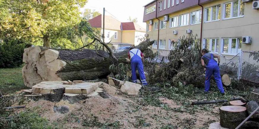 Uklanjaju se stabla iz parka srušena u olujama - drvo za ogrjev siromašnima