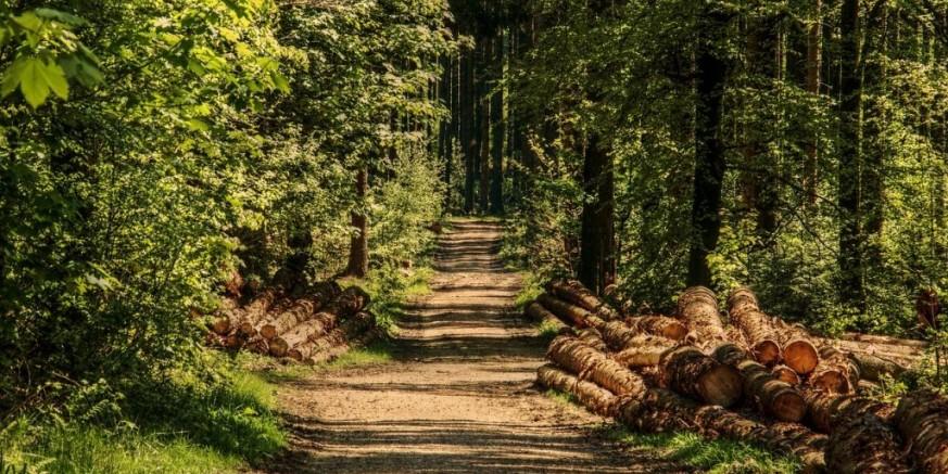 """Vlasnici šuma! U HGK Varaždin u četvrtak, 18. 04., radionica za """"Ulaganja u šumsku infrastrukturu"""""""