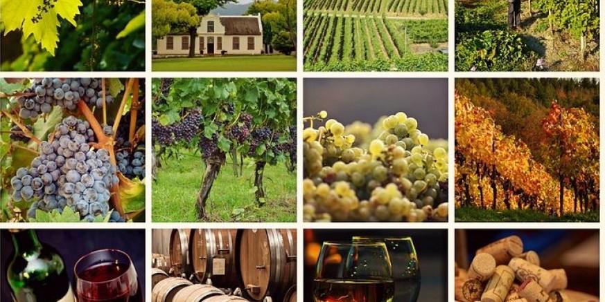 wine-1597376_960_720-e1526282621639.jpg