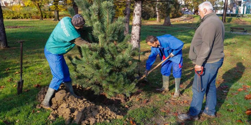 REKONSTRUKCIJA GLAVNOG PARKA  Počela sadnja 65 mladih stabala i 906 grmova