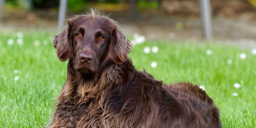 POZIV VLASNICIMA PASA U PRIGORCU Ne puštajte pse da se kreću bez nadzora!