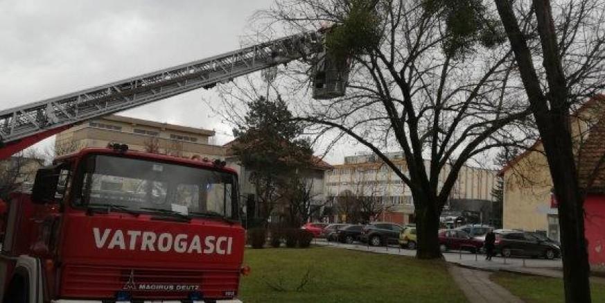 ZBOG OPASNOSTI ZA SIGURNOST GRAĐANA Uklonjena lipa ispred poslovno-stambenih zgrada u centru Ivanca