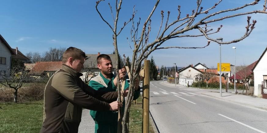 drvored malezova.jpg