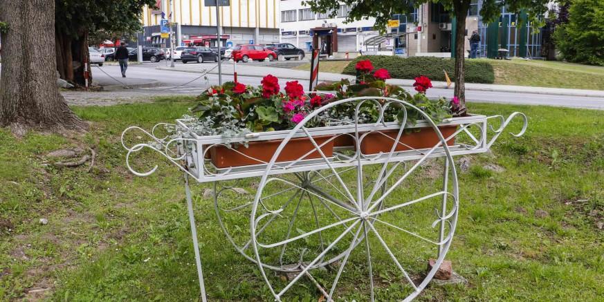 cvijece-park-290520.jpg