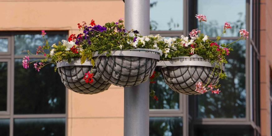 IZ GRADSKOG PROGRAMA ODRŽAVANJA Javne površine ukrašavaju se tisućama cvjetnih sadnica