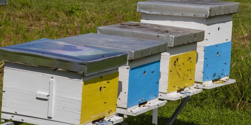 POMOĆ PČELARIMA Grad Ivanec pčelarima isplatio potpore za očuvanje 572 pčelinje zajednice